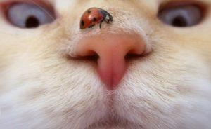gato-curiosidade-olhar-300x184 صور غريبة جدا, صور عجيبة جديدة, صور غريبة ومضحكة, Photos strange and funny