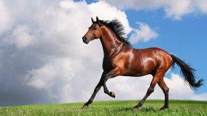image-6-300x169 صور خيول جميلة, صور حصان, اجمل صور الخيل