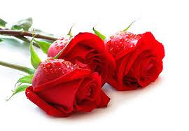 images-141 صور ورد جميلة حمراء, ورود متحركة وخلفيات جميلة, لكل من يحب صور الورد