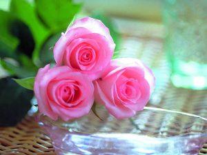 images_roses_011-300x225 صور ورد, صور ورود متنوعه حمراء زرقاء جميلة لامعه, نوع جديد من الورد