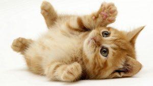 kitty-cat-300x169 صور قطط حلوه, صور قطط قمرات, قطة جميله Photos Cats