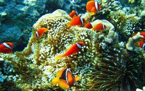 maxresdefault-1-46-300x188 صور اسماك, صور اسماك البحر الاحمر, تحميل صور اسماك متحركة