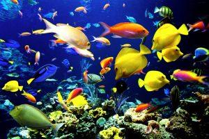 maxresdefault-127-300x200 صور اسماك, صور اسماك البحر الاحمر, تحميل صور اسماك متحركة