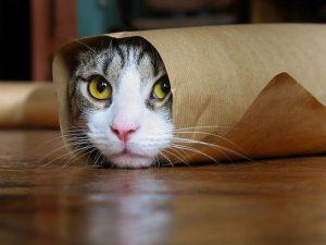 maxresdefault-142-300x225 صور قطط حلوه, صور قطط قمرات, قطة جميله Photos Cats