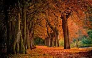 t-300x188 صور طبيعه للخريف والربيع hd , صور طبيعه رومانسيه خريف وربيع