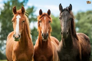 the-evolution-of-the-horse-and-what-it-means-for-the-horse-owner-53a2908e63fc5-300x199 صور خيول جميلة, صور حصان, اجمل صور الخيل