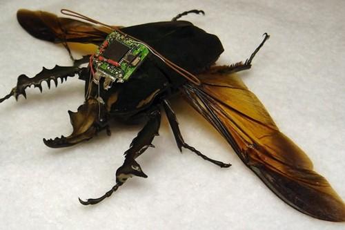 """حشرات داربا للتجسس """"DARPA's Cyber Bug Project 1 اغرب الاشياء استخدام الحشرات في الحروب , قنابل النحل"""