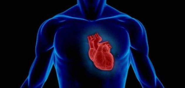 Photo of كيف يعمل القلب البشري