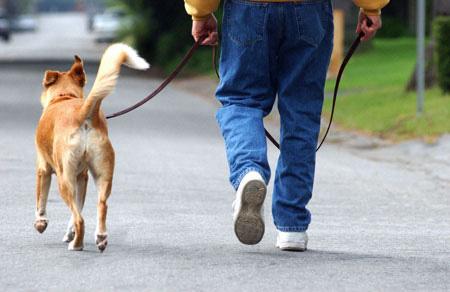 ممشي-الكلب اغرب 10 وظائف في العالم