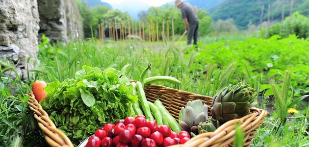 ما المقصود بالتنمية الريفية؟ ملف شامل حول الريف