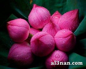 Image100006-10-300x240 صور صباح الخير , صور صباحيات جميلة , اجمل صور الصباح للفيس بوك