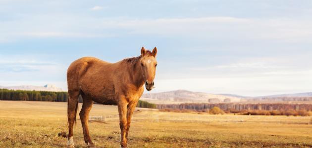 Photo of الحصان فى الحلم